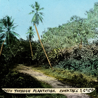 Coloured slide: a path through a plantation with trees and leafy vegetation on either side.